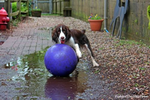 muddy pup 2